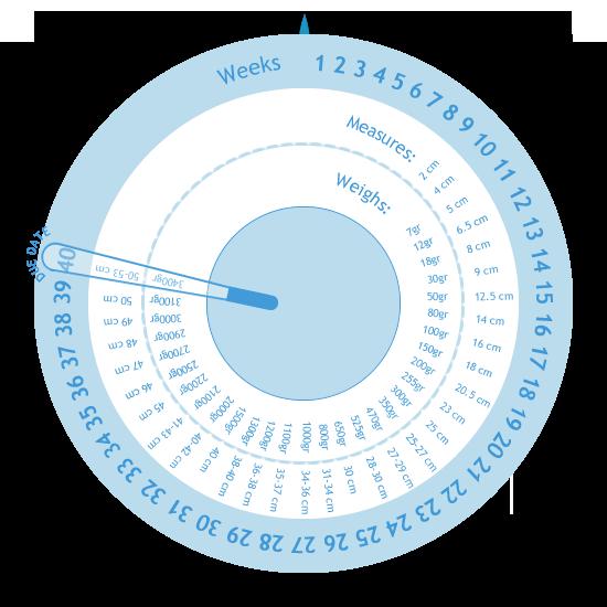 صورة حاسبة الحمل والولادة , كيفية حساب موعد الولادة وفترة الحمل 5915 1