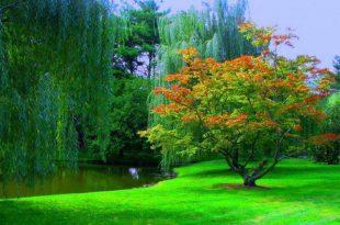 صورة صور منظر طبيعي , اجمل واحلى الصور للمنظر الطبيعى