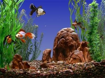 بالصور صور عن البيئة , صور تحفة جدا عن البيئة 6306 10