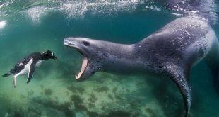 صور عجائب البحر , غرائب و عجائب عالم البحار