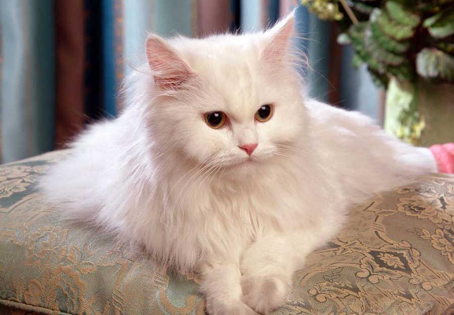 بالصور رؤية القطط بالمنام , تفسيرات و معنى رؤيه القطه فى منام الانسان 984 2