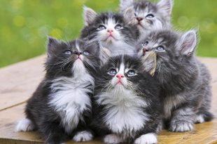 صورة اجمل الصور للقطط في العالم , صور التقطت بشكل جميل للقطط حول العالم