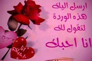 صورة صباح الورد حبيبتي , كلمات رقيقة تقال للحبيب فى الصباح