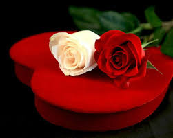 بالصور كلام للحبيب من القلب , من القلب للقلب رسول 3236 6