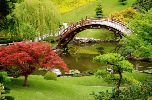 بالصور احلى صور في العالم , اجمل صورة في العالم 4755 11 310x205