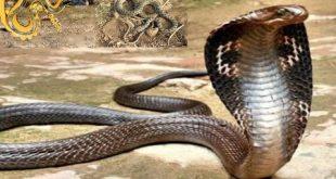 صور انواع الثعابين , تعرف على انواع الثعابين