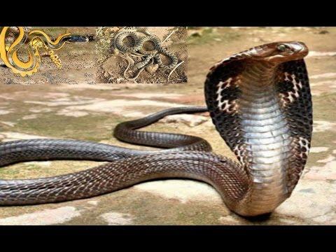 صورة انواع الثعابين , تعرف على انواع الثعابين