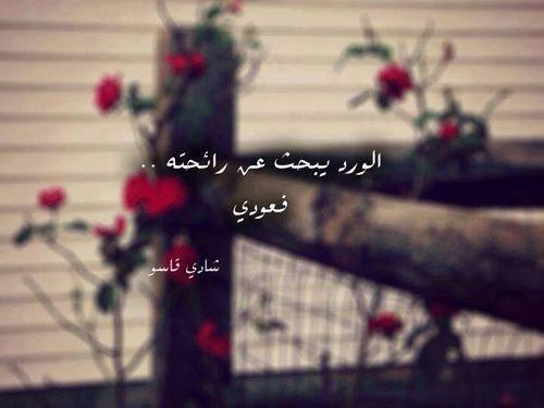 بالصور عبارات عن الورد , خواطر رقيقه فى حب الورد 713 10