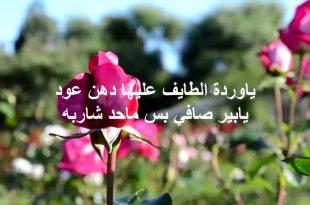بالصور عبارات عن الورد , خواطر رقيقه فى حب الورد 713 11 310x205