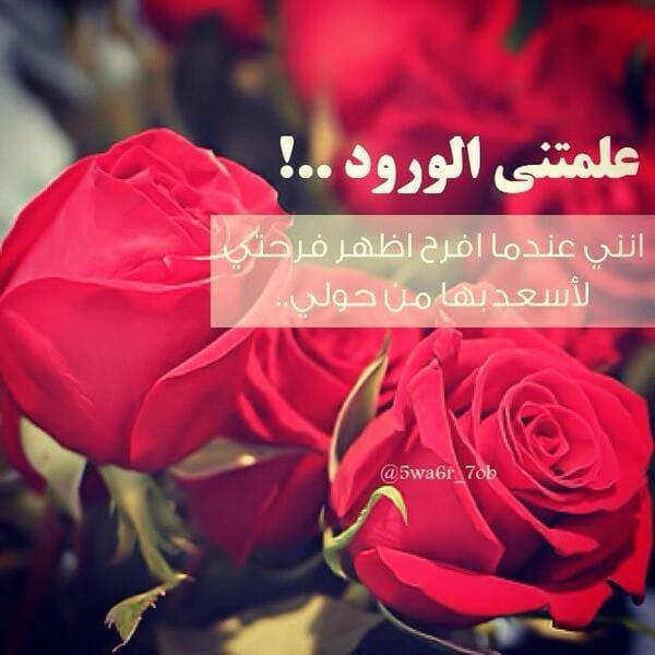 بالصور عبارات عن الورد , خواطر رقيقه فى حب الورد 713 5