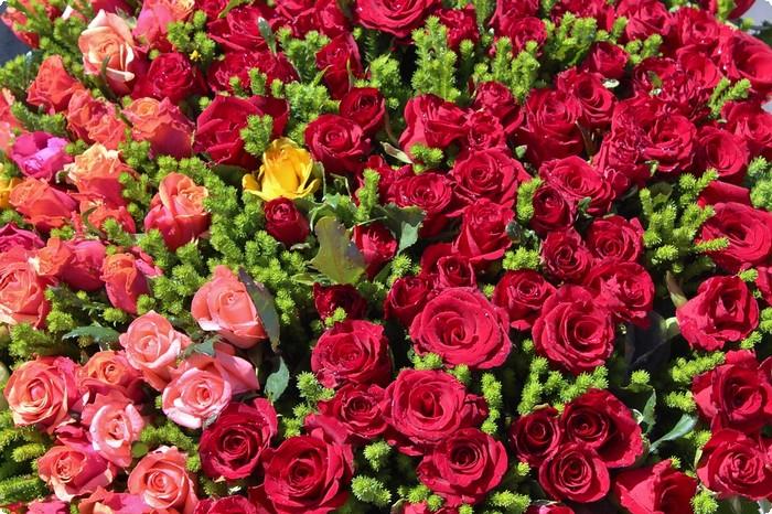 بالصور عبارات عن الورد , خواطر رقيقه فى حب الورد 713 8