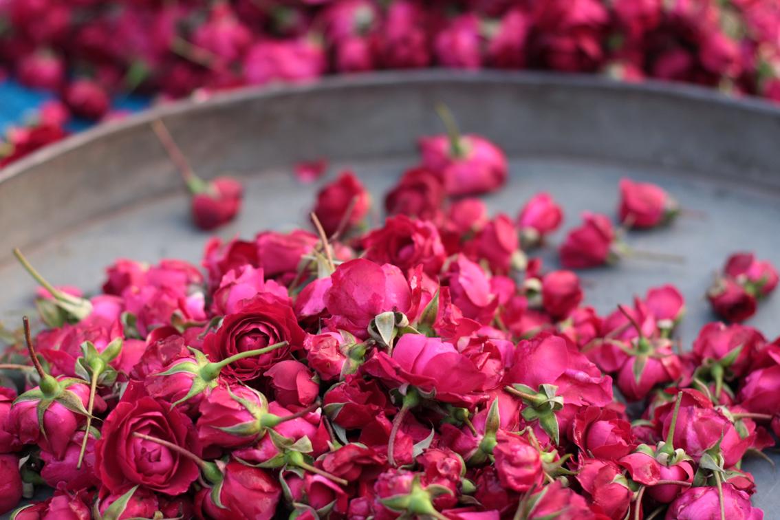 بالصور عبارات عن الورد , خواطر رقيقه فى حب الورد 713 9