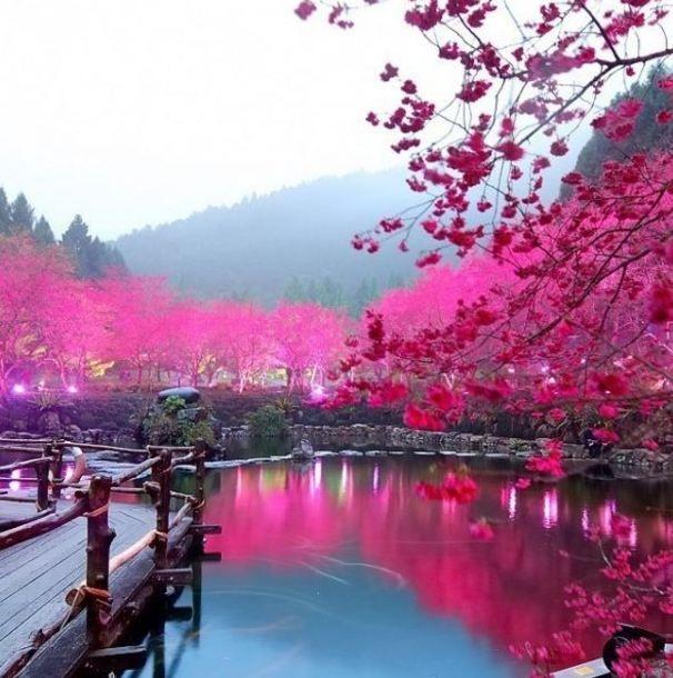 بالصور صور الطبيعة الجميلة , مناظر ساحرة رائعه فى الطبيعه 736 11