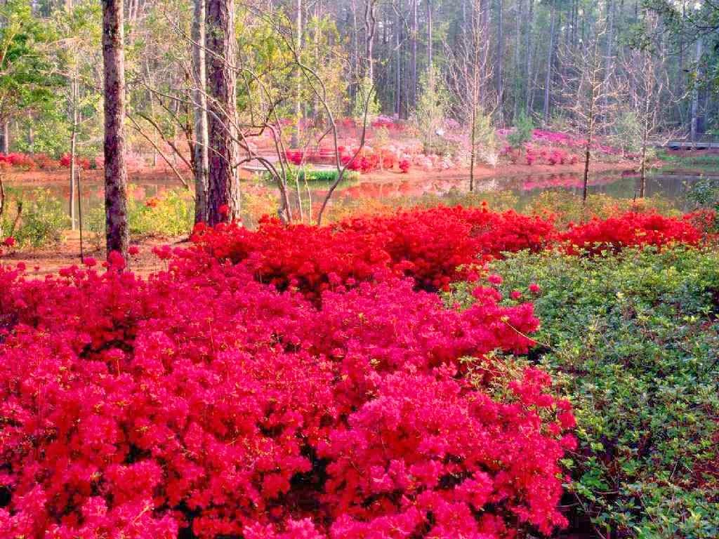 بالصور صور الطبيعة الجميلة , مناظر ساحرة رائعه فى الطبيعه 736 3