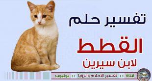 صور رؤية صغار القطط في المنام , تفسير حلم مشاهد القطط