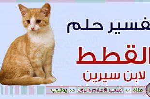 صورة رؤية صغار القطط في المنام , تفسير حلم مشاهد القطط