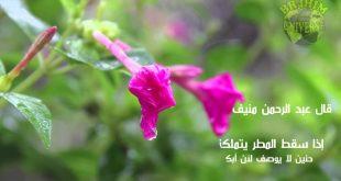 بالصور حكم عن الطبيعة , مقولات عن الطبيعية 12550 10 310x165