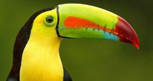 بالصور من الطيور الجميلة , اجمل صور الطيور 12641 12 310x165