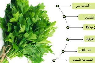 صور فوائد بذور البقدونس , طريقة استخدام البقدونس