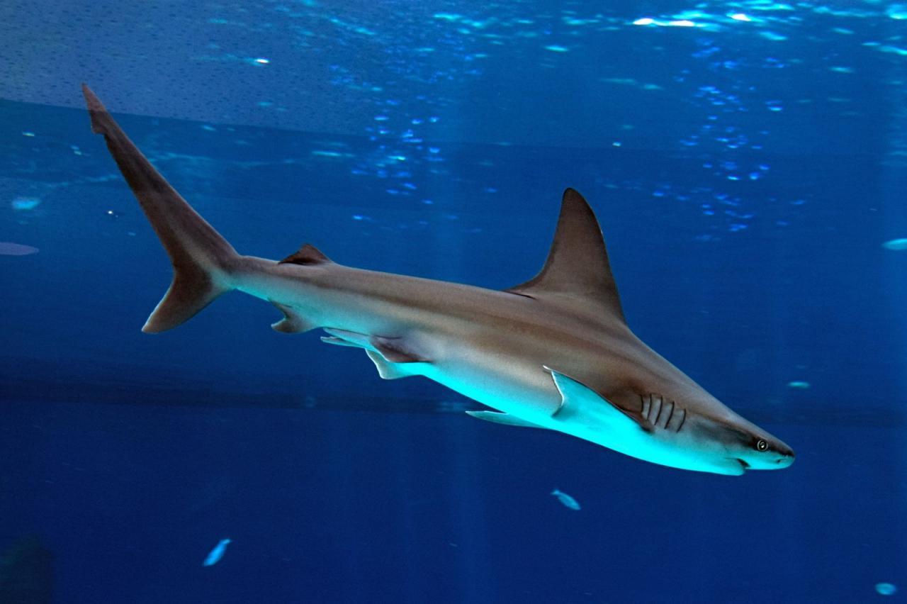 صورة سمك القرش في الحلم , دلالة رؤية سمك القرش