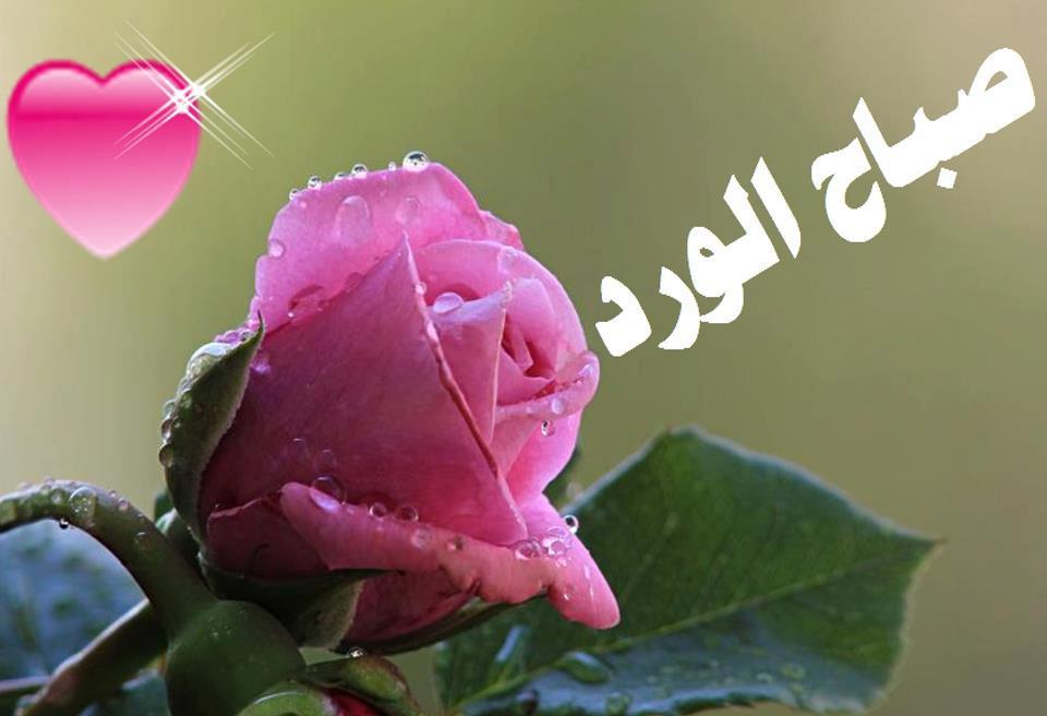 صورة صباح الامل والمحبة , اجمل كلمات عن الصباح