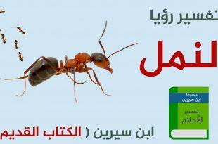 صورة تفسير حلم نمل يقرصني , رؤية الحلم بالنمل