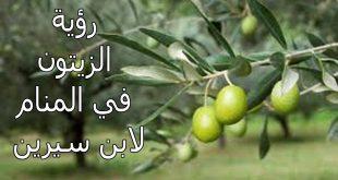 صورة تفسير حلم شجرة الزيتون , معنى رؤية حلم الزيتون في المنام