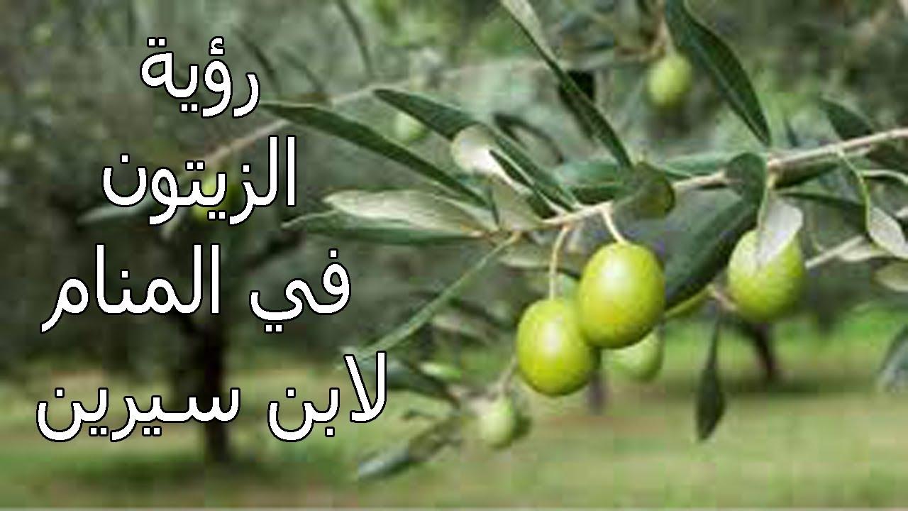 صور تفسير حلم شجرة الزيتون , معنى رؤية حلم الزيتون في المنام
