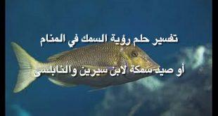 بالصور ما تفسير السمك في المنام , رؤية السمك في الحلم 12224 3 310x165