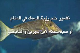 صور ما تفسير السمك في المنام , رؤية السمك في الحلم