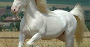 صورة اجمل خيول في العالم , الخيول جميلة